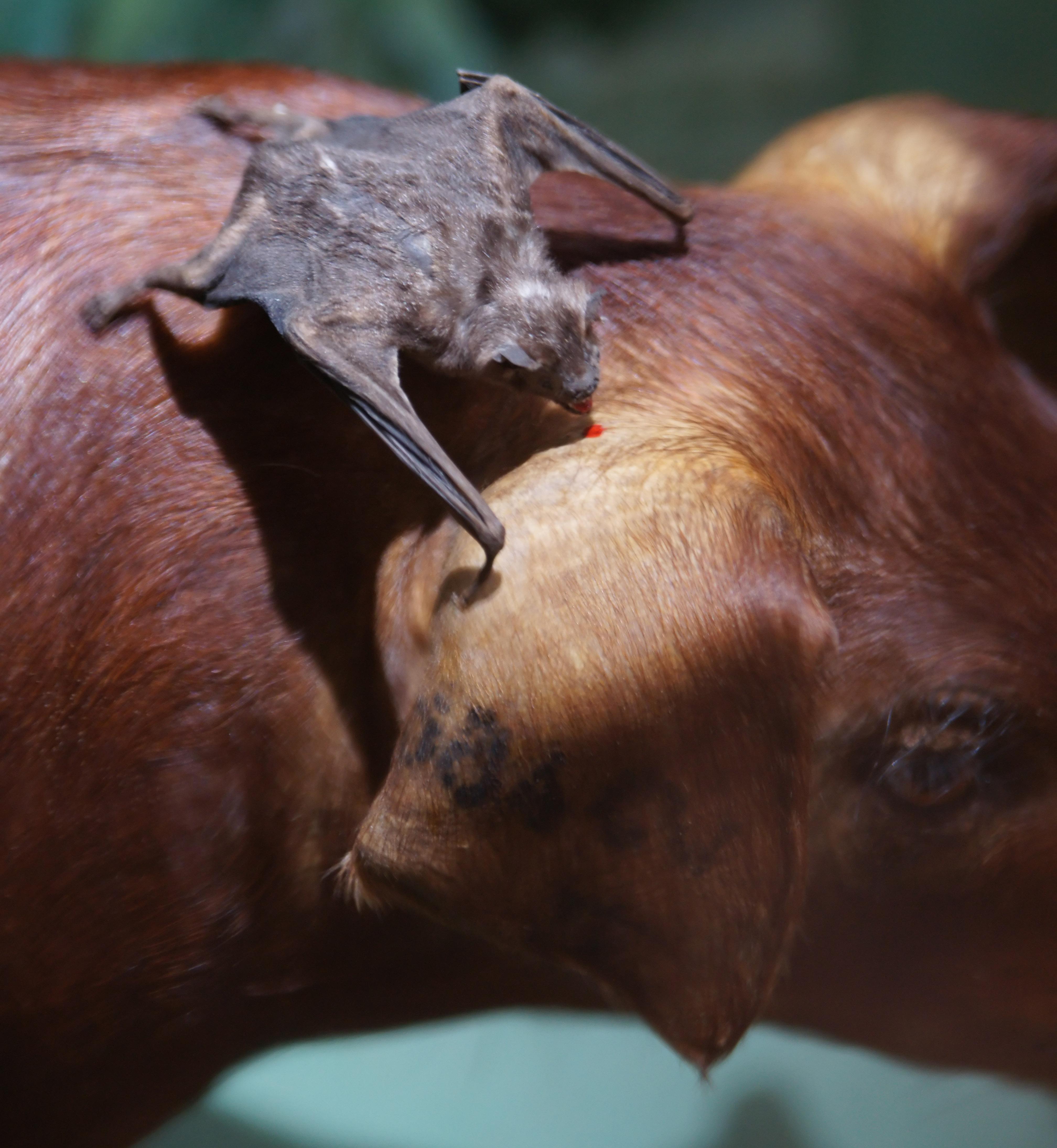 Зверь который пь т у животных кровь фото 2